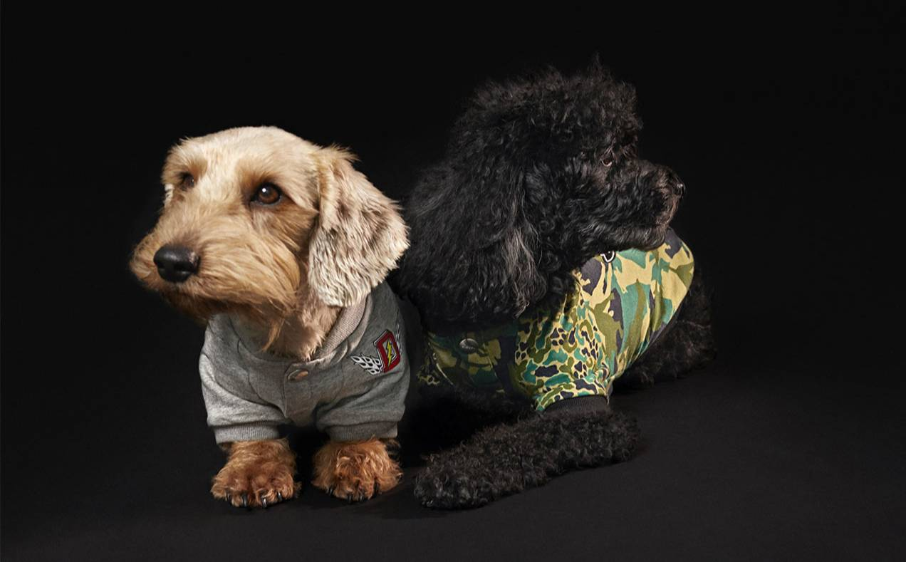 Diesel steps into petwear with collection for dogs