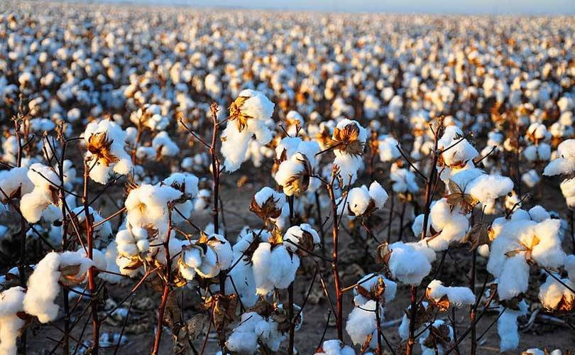 Wool and cotton price hit all-time highs as demand exceeds production