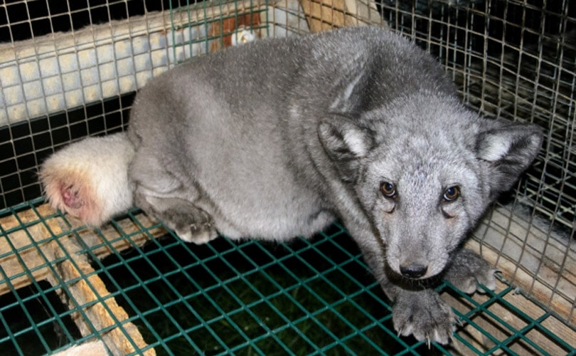 The problem with 'humane' certified fur and angora