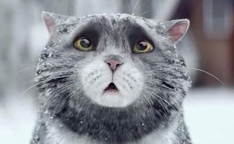 Sainsbury's 'Mog the Cat' wins the Christmas 2015 advert battle