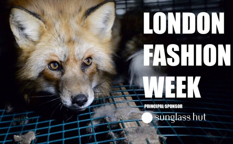 Petition calls on the BFC to ban fur from London Fashion Week