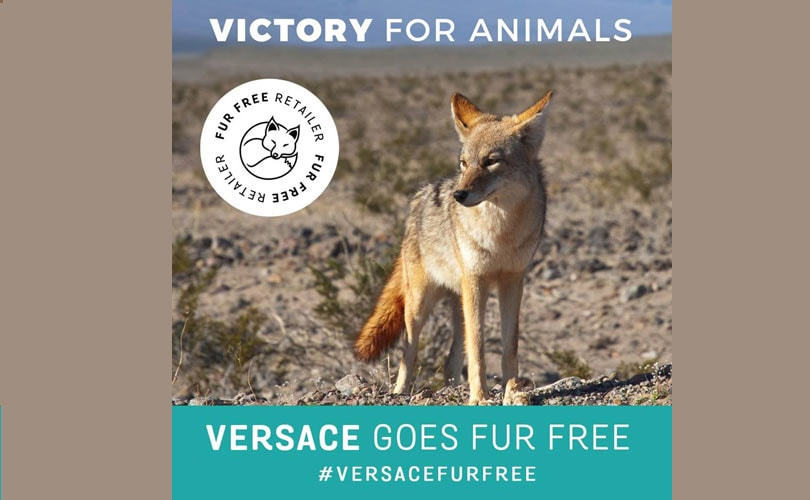 Furla & Versace go fur-free as fashion houses turn their backs on fur