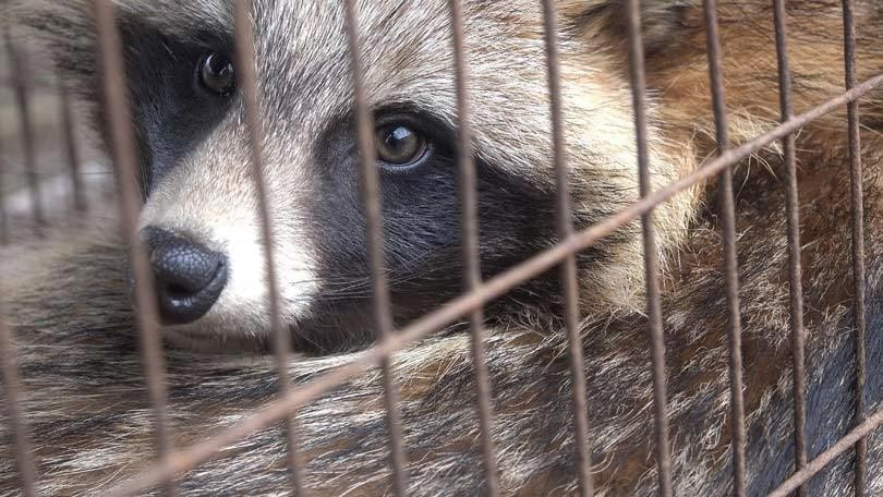 animals should not be kept in cages debate