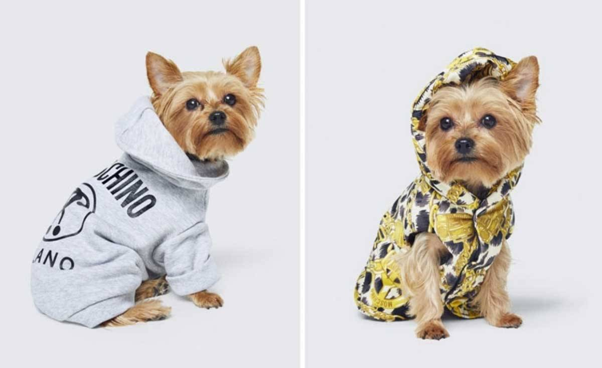 Petwear: The emerging market in the fashion industry